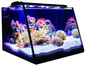 Lifegard Aquatics Full-View 7 Gallon Aquarium with LED Light, Heater, Net, Algae Magnet & Built-in Back Filter with Pump