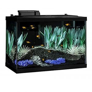 Tetra 20 Gallon Best Fish Tank