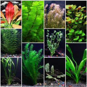 10 Species Live Aquarium Plants Package by AquaLeaf Aquatics