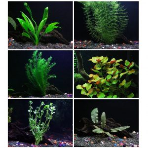 25 Plus Stems Best Aquarium Plant