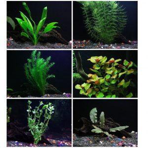 25+ Stems Best Low Light Aquarium Plants