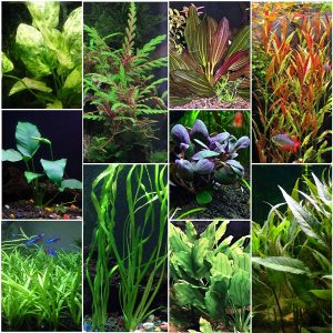 Florida 10 Species Live Aquarium Plant Bundle