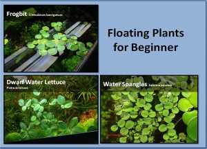 G'z Aquarium Floating Plants Package