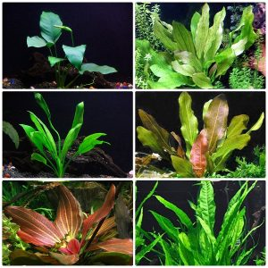 Rooted Live Aquarium Plant Bundle - 6 Easy Species by AquaLeaf Aquatics
