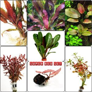 Super Red Set Package Live Aquarium Decorations Aquatic Plants Fish Tank By Mainam